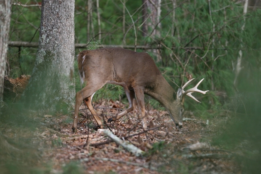 2017-Louisiana-Deer-Forecast-Feature